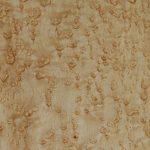 Funier Vogelaugenahorn Amerika Weißgelblich